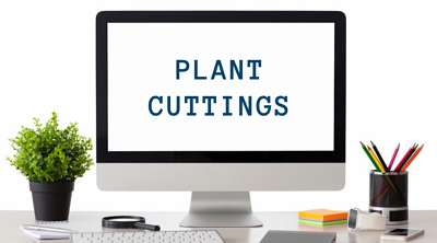 SWI_PlantCuttings